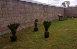 Plantas ao redor da pista de caminhada